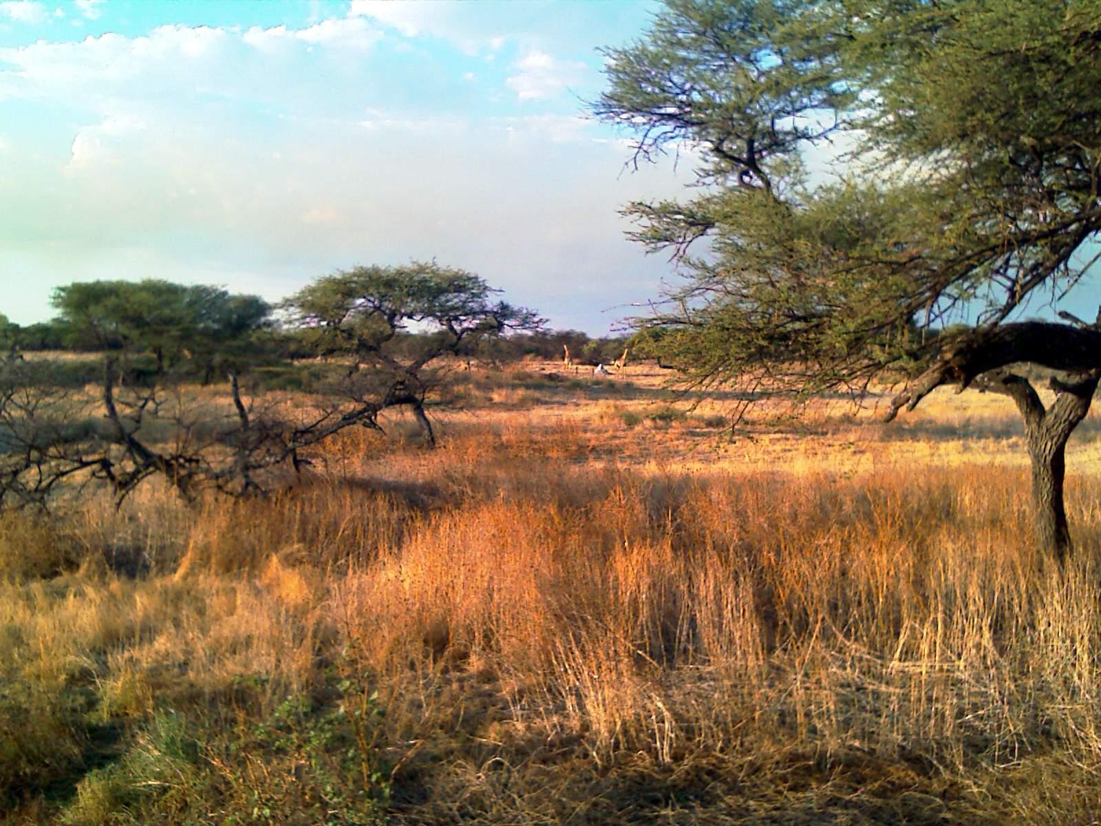 Namibia 11.11. – 8.12.2012